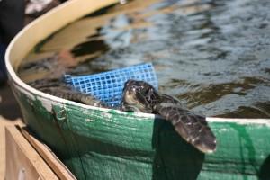 Michmoret Sea Turtle Rescue Center